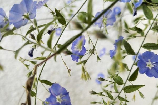 Les bienfaits des plantes vertes chez soi