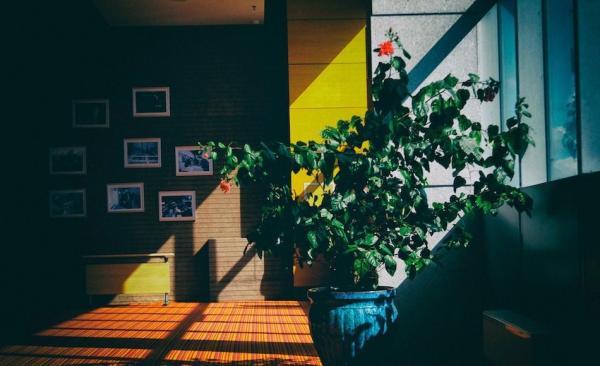 En plus d'être agréables à regarder, les plantes peuvent aussi vous rendre plus heureux. (Image : StockSnap/Pixabay)
