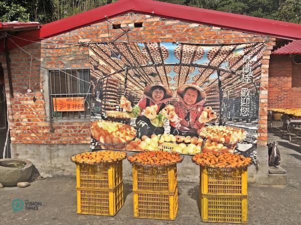 La ferme de loisirs pour plaqueminier, ou kaki, de Weiweijia est l'une des fermes de kaki les plus populaires du nord de Taiwan. (Image : Julia Fu / Vision Times)