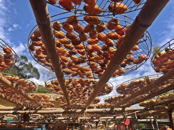 Les kakis sont placés sur des supports en bambou pour sécher au soleil après avoir été pelés. (Image : Billy Shyu / Vision Times)