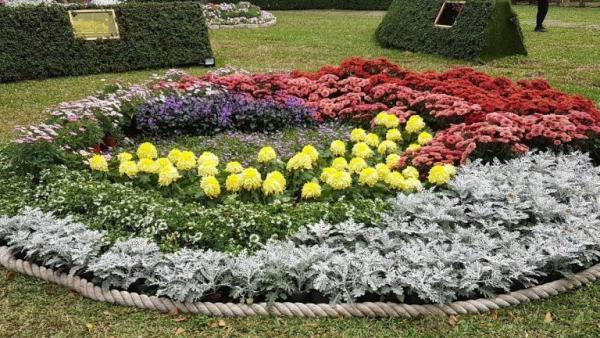 Une grande variété de fleurs colorées sont exposées au Salon du chrysanthème de la résidence Taipei Shilin 2020. (Image : avec l'aimable autorisation de Xu Ninag)