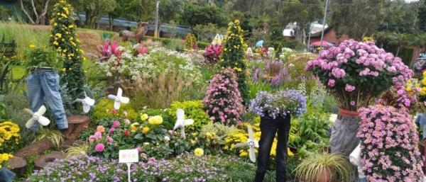 Plus de 100 espèces différentes de fleurs et de plantes sont exposées dans l'exposition florale. (Image : avec l'aimable autorisation de Chen Xiuluan)