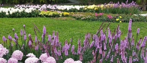 Taipei Shilin Residence Chrysanthemum Show étonne toujours les visiteurs avec des fleurs colorées chaque année. (Image : avec l'aimable autorisation de Chen Xiuluan)