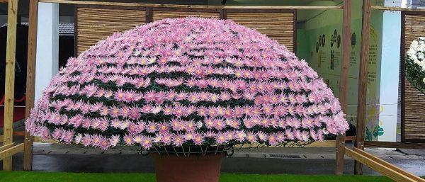 La « grande zone d'exposition des variétés de chrysanthèmes » est l'un des endroits les plus populaires de l'exposition florale. (Image : avec l'aimable autorisation de Xu Niang)