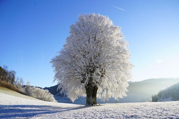 Si les conditions météorologiques sont anormales en hiver, par exemple s'il neige dans des endroits où il ne neige jamais, cela signifie que les énergies ne sont pas correctement équilibrées. (Image :Hans Braxmeier/Pixabay)