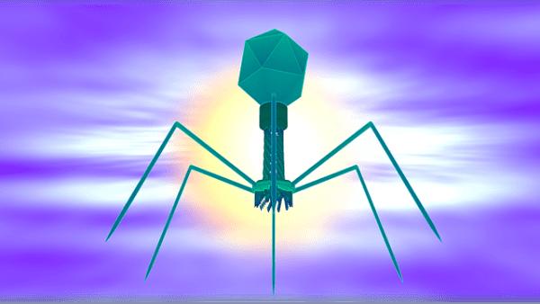 Certains virus sont bactériophages. Ils sont utiles pour lutter contre les maladies d'origine bactérienne. (Image :Raman Oza/Pixabay)