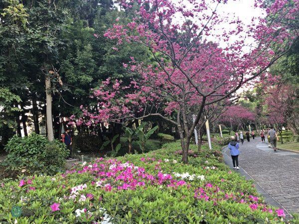 De nombreux cerisiers et azalées sont en pleine floraison au parc commémoratif de Chiang Kai-shek. (Image : Billy Shyu / Vision Times)