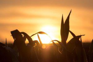 Une philosophie de l'agriculture régénérative consiste à nourrir d'abord le sol pour nourrir les plantes.(Image :T. Q./Unsplash)