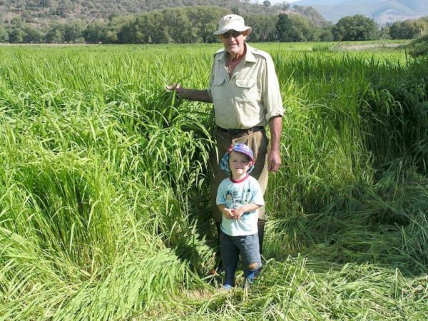 Johnny Whitsed et son petit-fils, Zac Whitsed s'émerveillent de la croissance de l'herbe pour la récolte à venir, obtenue grâce à l'agriculture biologique et régénérative. (Image : Keenan Whitsed)