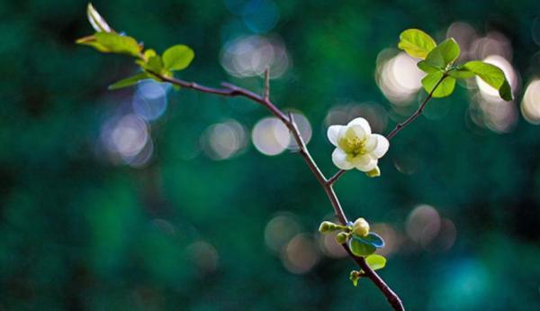 Le printemps. (Photo : Shenyunperformingarts.org)