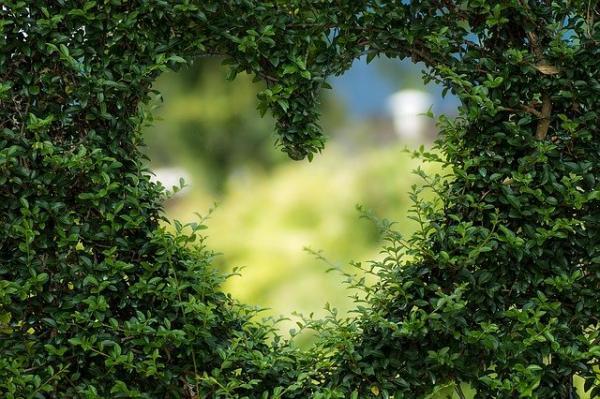 L'apparence naît du cœur. (Image :Bianca Mentil/Pixabay)