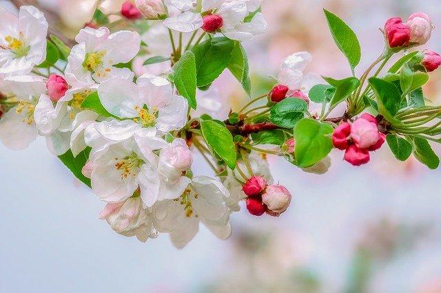 Au printemps, nourrissez votre foie
