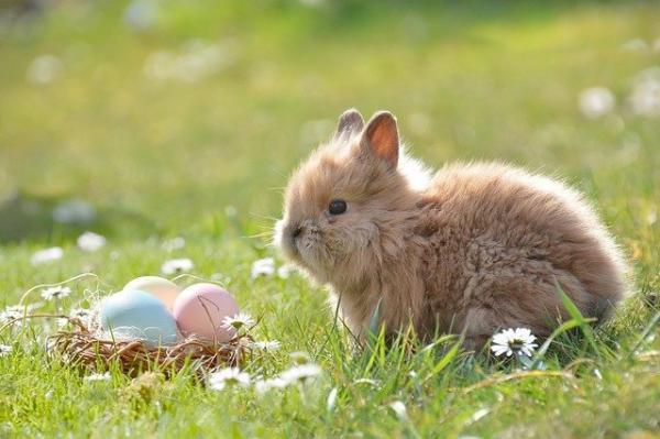 Les œufs de Pâques symbolisent la « nouvelle naissance » et la « renaissance » de la vie : une coutume qui a des origines très anciennes et dont on sait qu'elle existait bien avant la naissance de Jésus-Christ. (Image :Rebekka D/Pixabay)