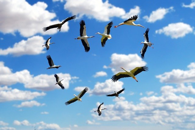 Le mystère de la migration saisonnière des oiseaux