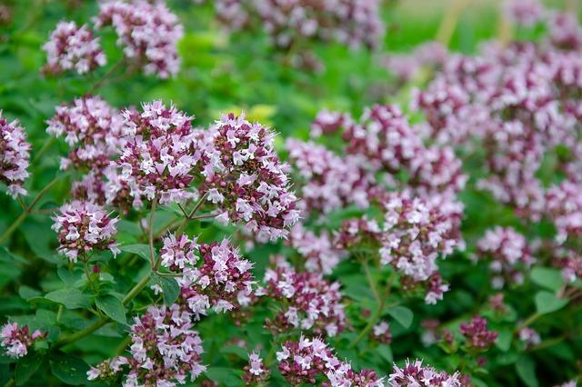 Six plantes anti-moustiques faciles à cultiver chez soi