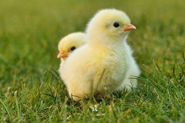 Le respect des droits de l'animal à la vie, un retour à l'humanité