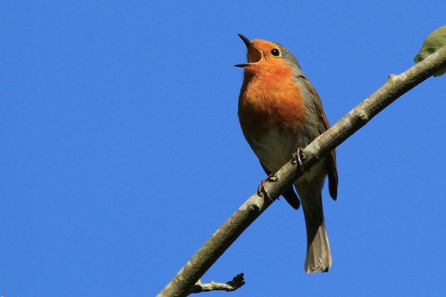 Le chant peut soulager le stress, renforcer le système immunitaire et contribuer au bien-être