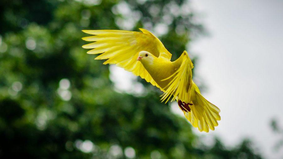 Les plumes d'oiseaux: un trésor à la fois ingénieux et plein de charme