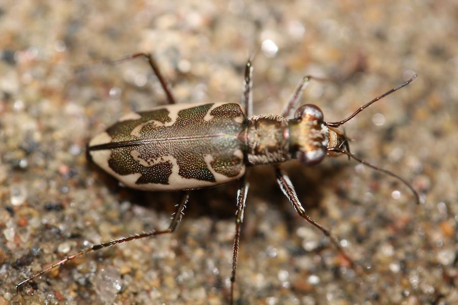 Sauver les insectes : notre écosystème en danger